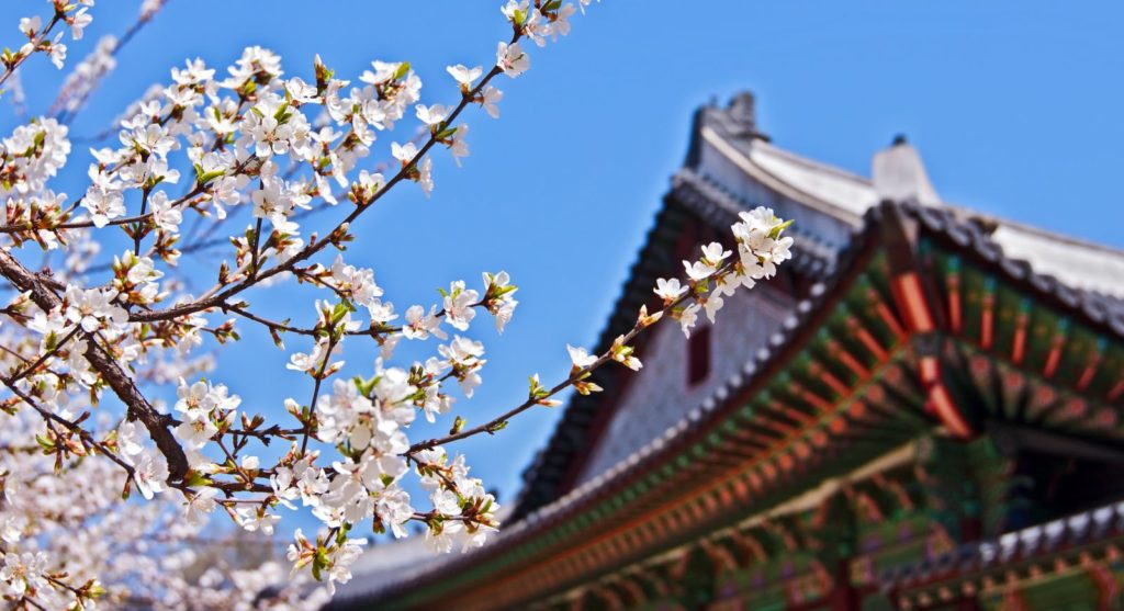 Korean palace with blossoms